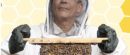 Are Bees Dangerous?